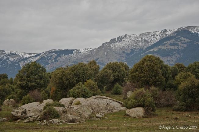 Paisaje de Juniperus oxycedrus