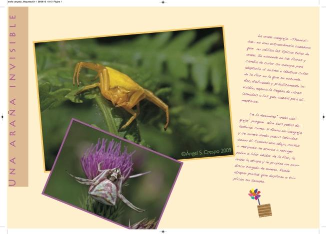 araña cangrejo_Maquetación 2
